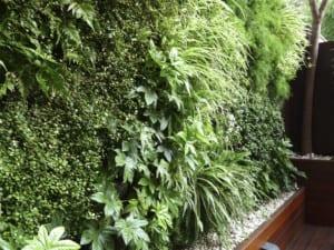 Diseño de jardines integrales en Barcelona. Plantas y enredaderas para jardines integrales