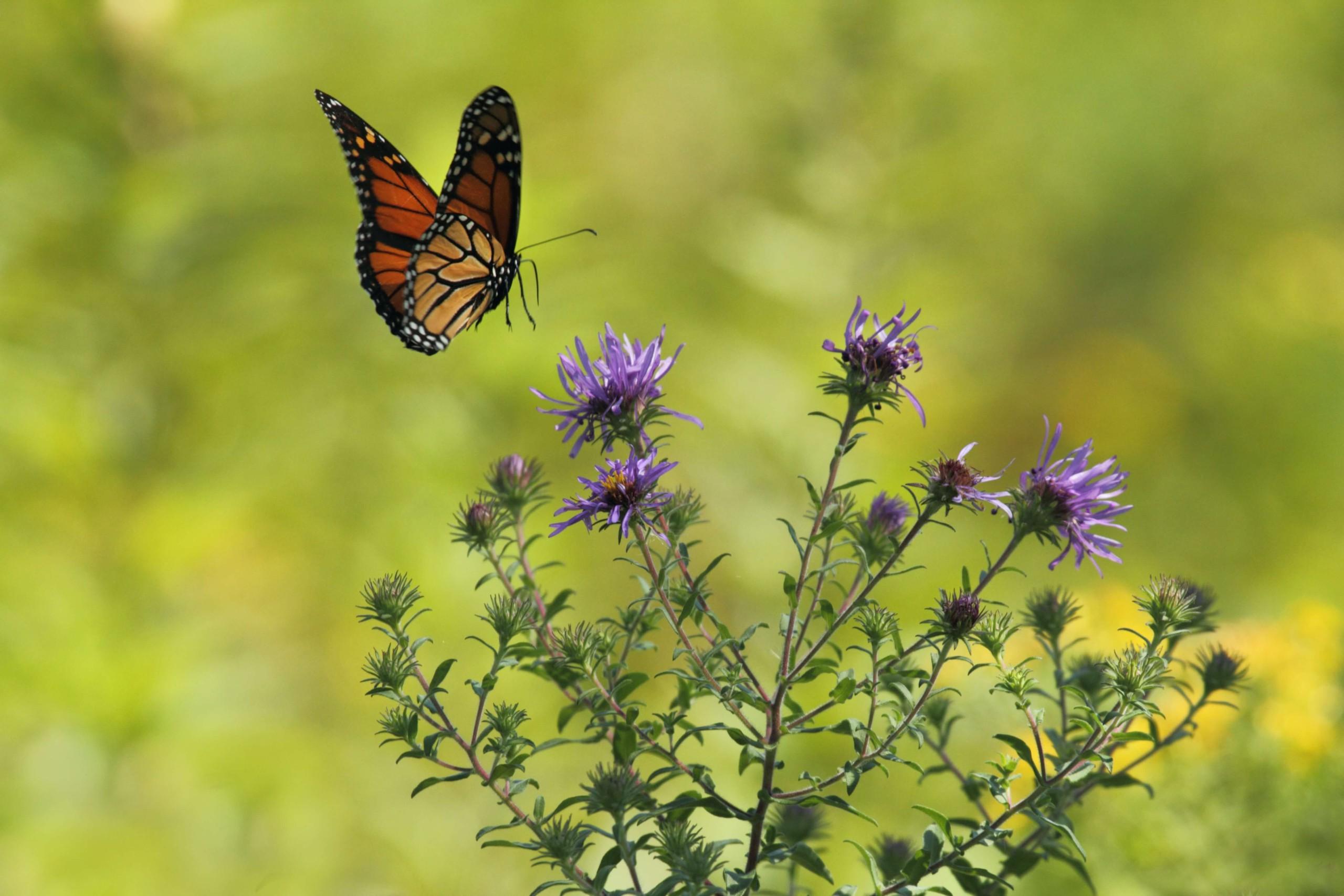 jardin asilvestrado mariposas